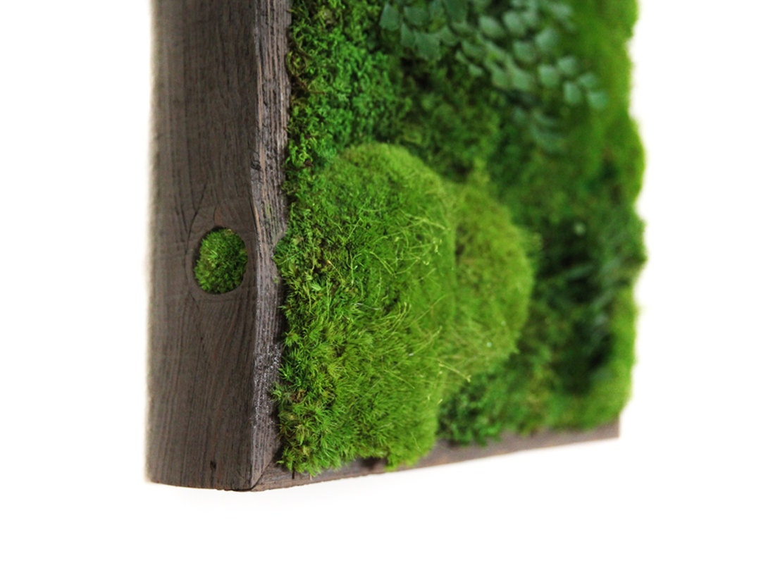12x12 artisan moss plant painting moss and ferns. Black Bedroom Furniture Sets. Home Design Ideas