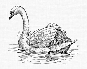 Swan Digital Image Download - Bird Illustration - PNG and JPG for Scrapbooking, Transfers, Collages...