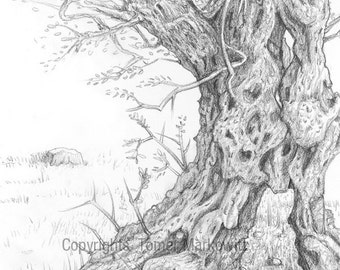 Olive tree - pencil drawing, high quality print
