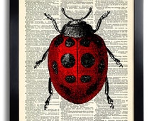 Ladybird Art Print Vintage Book Print Recycled Vintage Dictionary Page Collage Repurposed Book Upcycled Dictionary 311