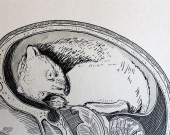 Hibernate Bear - Medical Art Print