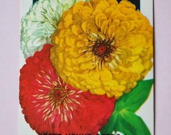 1930s Vintage Zinnia Flower Seed Packet