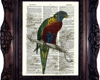 Parrot Dictionary art print. Vintage Art Print. Print on Book Page. Parrot from Natural History. 19. century. Dictionary print. Code:384