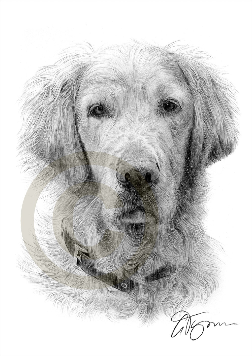 Dog golden retriever pencil drawing print a4 size artwork - Dessin golden retriever ...