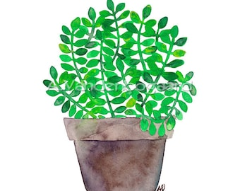 SALE Green Jade Original Watercolor Succulent Botanical Painting Kitchen Wall Artwork