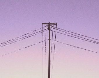 The Flock - Minimalist Birds Photograph - Square Format