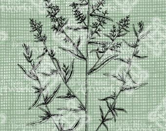 Digital Download Tarragon Herb Spice Botanical image, Antique Illustration  c. 1900, digi stamp, digis, digital stamp