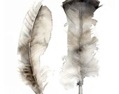 Turkey Feathers- archival print, feather art, feather watercolor