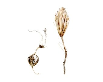 Pod Still Life Botanical Photography Sepia Print Neutral Decor Nature