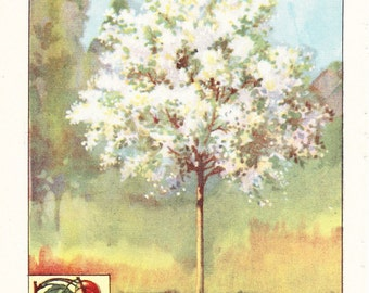 1926 Botany Print - Plum Tree - Vintage Antique Book Art Illustration Nature Natural Science Great for Framing