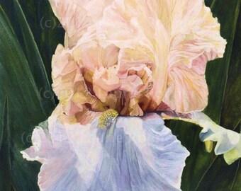 Watercolor Original Painting Iris Botanical Detailed Realism Garden Flower