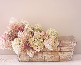 Gorgeous hydrangea-flower photography-flower photo- cottage garden photo-pastels (5 x 7 Original fine art photography prints) FREE Shipping)
