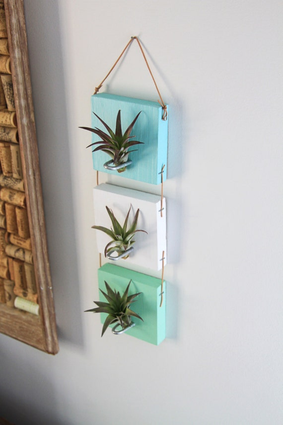 Plant Wall Art items similar to air plant wall hanging // cool living art // wall