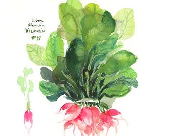 Pink radish print, Watercolor vegetable print, Kitchen art, Food print, 8X10 art print, Botanical poster, Home decor, Vegetable painting