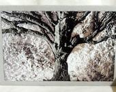 Many Winters Stitched Photo Art Card