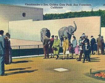 Vintage 1940s San Francisco Zoo Postcard