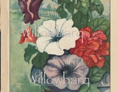 Petunia Hybrida. 1926 country cottage garden old fashioned botanical color lithograph print