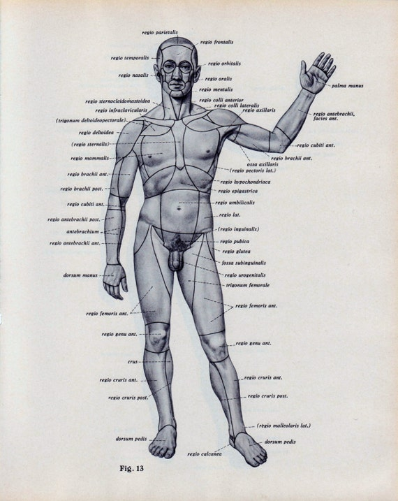 Male Body Anatomy Diagram Body Diagram Human Male