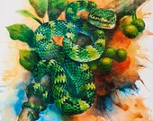 Print Snake from original watercolour painting, temple viper, Tropidolaemus Wagleri 39x30,5cm - LinkedArts