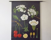Vintage Cherry Blossom Pull Down Chart - Cherry Botanical Print - Jung Koch Quentell 1963