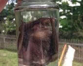 Scary Bat in a Jar - Preserved Wet Specimen Taxidermy