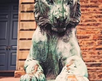 Princeton University, Fine Art Photography, 'Princeton Tiger 1,' New Jersey Photo, NJ Print, Graduation Gift, Ivy League College