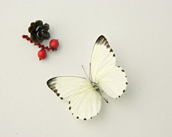 Real Dried Butterfly Specimen, Cream Butterfly, DIY , Terrarium Accent, Red Berries, Wedding Supply, Nature Outdoors, Photography