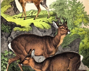 1877 Deer Doe Antique Deer Print Custom Matted Deer Hunting Gifts