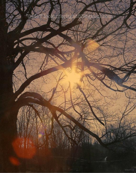 Abstract Tree Photo | Surreal Woodland Art | Tree Sunlight Print | Sunlight through a Tree Darkly | Moody winter tree | Winter Sunshine Art