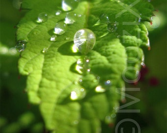 Nature photography - water - droplets - leaf - green - bright - vivid - summer - print
