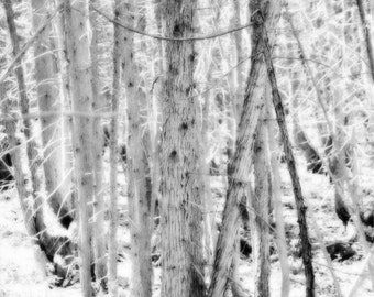 Birch photography winter home decor winter wall art birch forest art print white home decor winter photography winter art QUIET