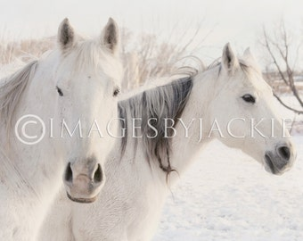 Two Horses Fine Art Photography Digital Download