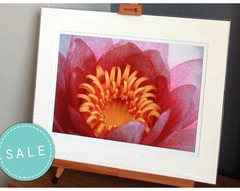 SALE Waterlily flower photograph, fine art photo print, landscape, nature, flowers, waterlily, pink