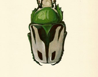 VINTAGE BEETLE PRINT 1964 Green Grey Beetle Art - Perfect for Boys Bedroom, Entryway, Bathroom, Hallway, Office, Birthday, Christmas (B41)
