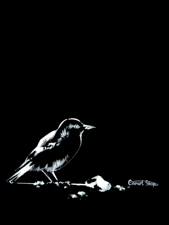 Bird ink drawing art prints 6x8 white on black drawing bird art