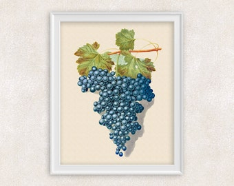 Grapes Botanical Print - 8x10 PRINT Fruit Art - Home Decor - Kitchen Art Prints -  Item #147