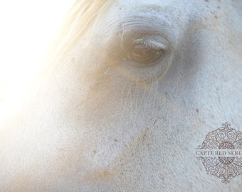 Sun shining beautifully over horse's face