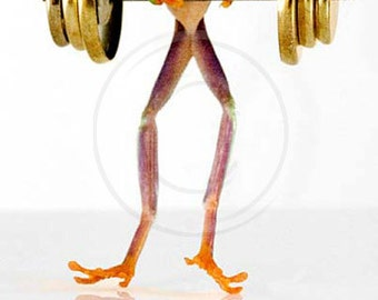 Barbells - Working Out - Weight Lifting Frog Art