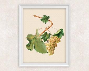 White Muscat Grapes BOTANICAL ART - 8x10 PRINT Fruit - Kitchen Decor - Item #120