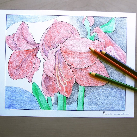 amaryllis coloring pages - photo#34