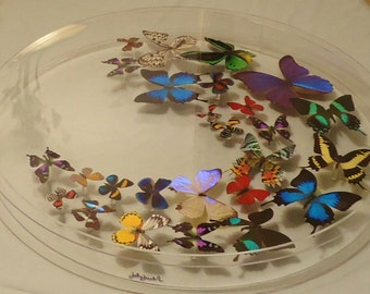 """24"""" circle ,butterfly display, mounted butterflies, butterfly art,  real butterfly art, butterflies in acrylic cases"""