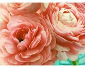Ranunculus - Photography - Flower Photograph - Nature - Let Me Count The Ways -  Spring - Original Fine Art Photograph - Pink - Floral  Art