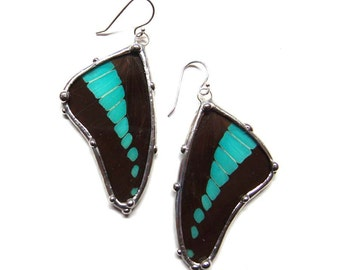 Insect Jewelry, Spring Trends - Real Graphium Butterfly Wings Earrings - Blue and Black Dangle Earrrings