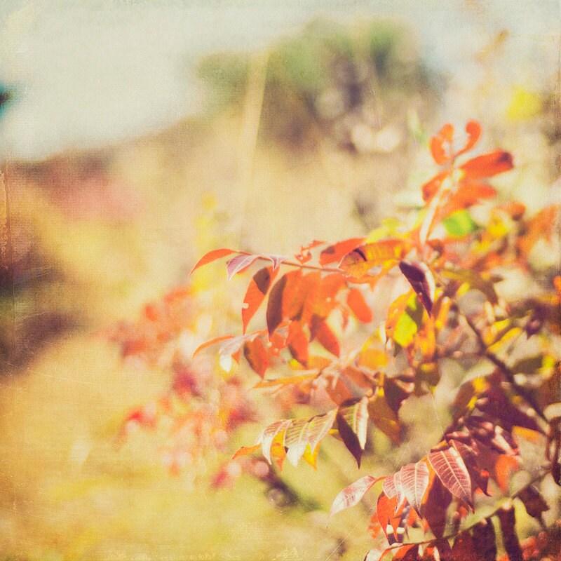 Autumn Red Leaves Field Kansas Landscape gallery32 etsy
