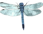 30 Objects from around the house - Dragonfly
