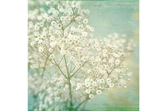 Baby's Breath Photograph, White Flower Print, Shabby Chic Decor, Pastel Art, Turquoise Decor, French Country Decor