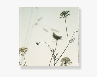 Queen Annes Lace photo canvas, flower canvas, shabby chic decor, nature photography, large wall art, canvas gallery wrap - Summer Lace