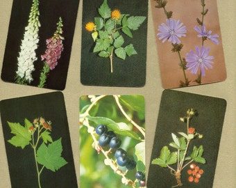 Edible & Poisonous Plants of the Western States, Cards for ATCs, Collage, Scrapbooking, Paper Arts, Assemblage and MORE PSS 2134