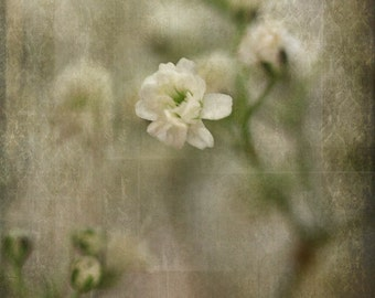 flower floral photography nature fine art photography home decor still life photography