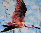 Roseate Spoonbill against dark sky 20 x 24